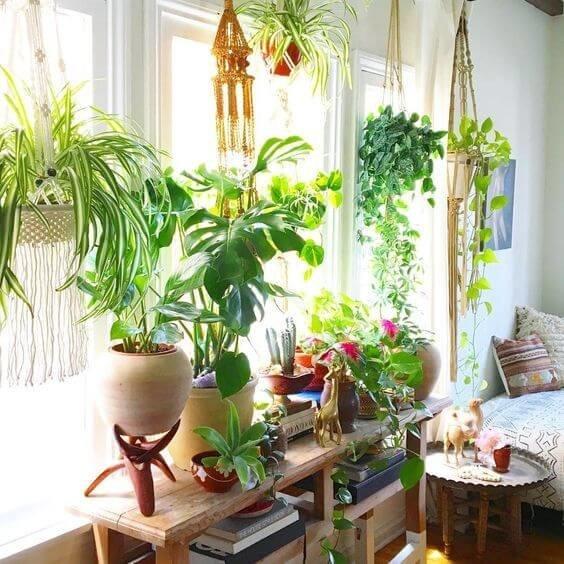 Устройте на своем подоконнике маленький зеленый сад...