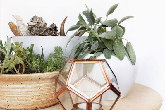Природные элементы: растения, древесина и  натуральный камень, являются гармонизирующим фактором общей стилистики